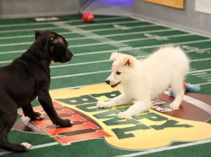 The Puppy Bowl IX - 2013